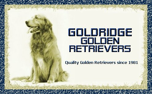 Goldridge Golden Retrievers